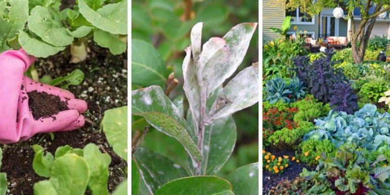 کاربرد قهوه در نگهداری از گل و گیاه و باغبانی که باید بدانید (14 کاربرد قهوه که نمی دانستید)