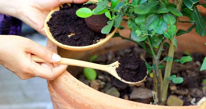 ۱۶ کاربرد خلاقانه پودر و تفاله قهوه؛ از کود باغچه تا زیبایی صورت   چطور